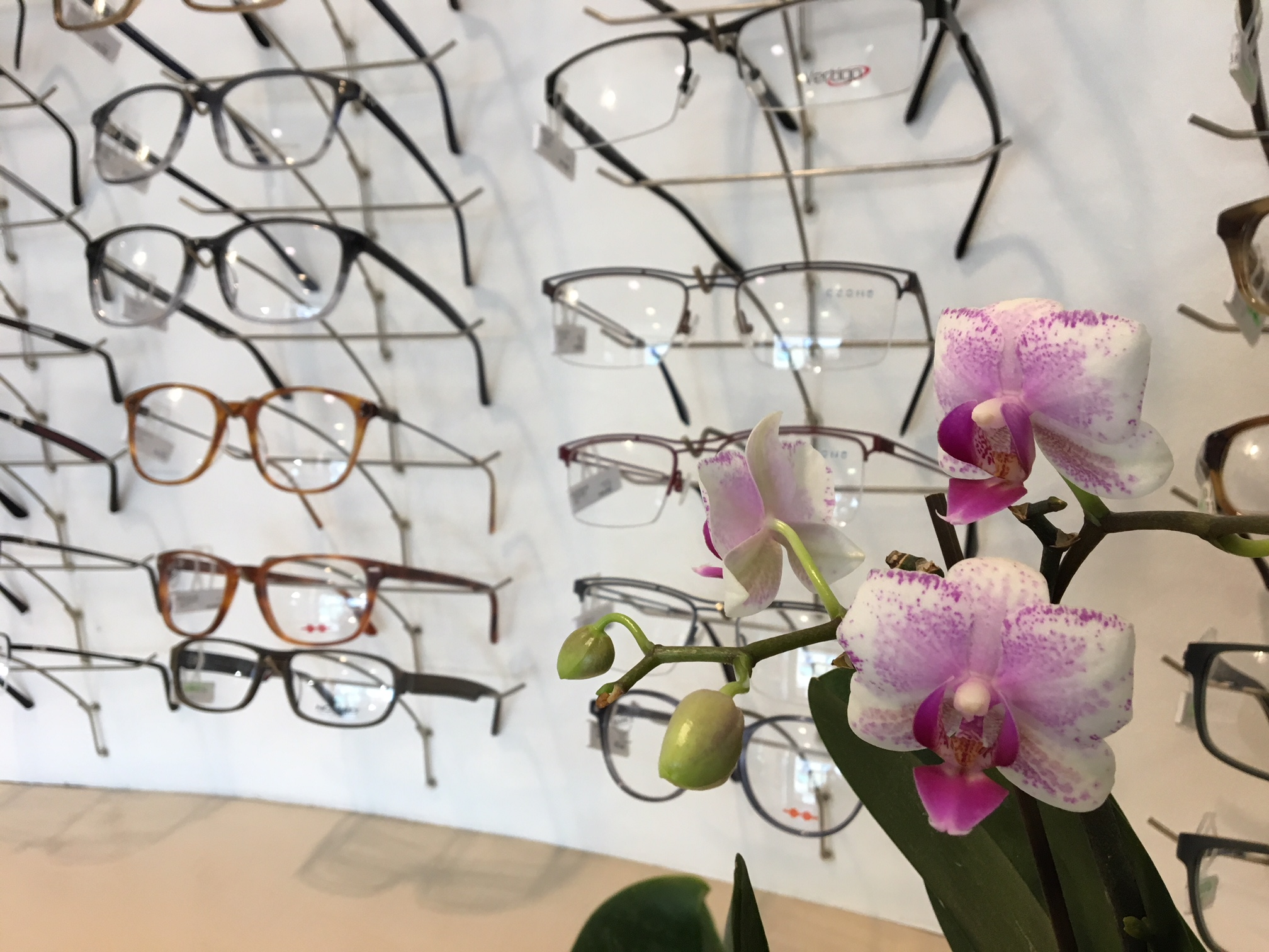 lunettes orchidee